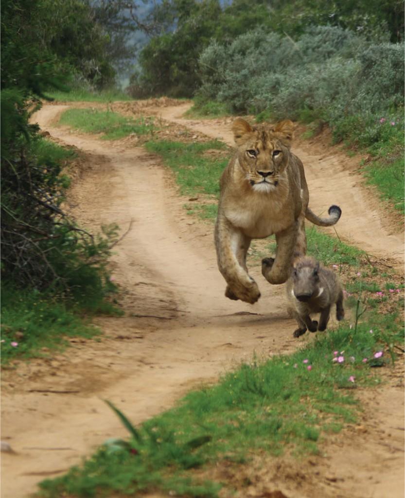 paul lion