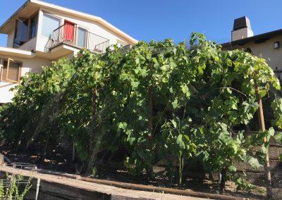 IMG_0747paul naude vines wolins